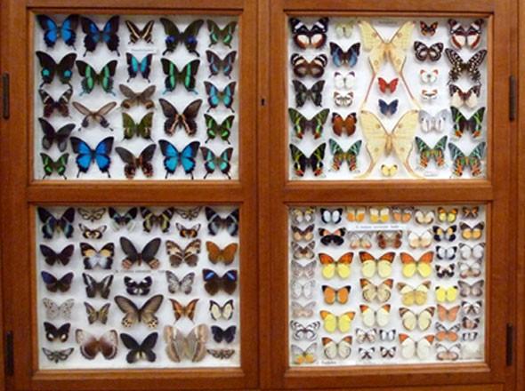Eine wundersame Welt - Missionsmuseum Steyl - Schmetterling Kabinett