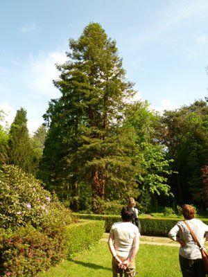 Redwood-Zwiesel Sequoia-Farm Kaldenkirchen Grenzwald Kaldenkirchen