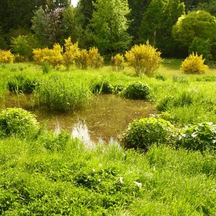 Teich mit Schilfroehricht im Geohydrologischen Wassergarten Grenzwald Kaldenkirchen