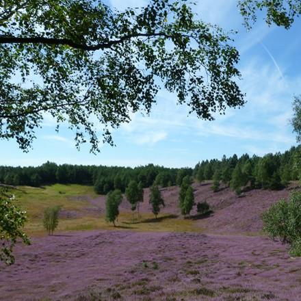 Erholung vom Alltag im Naturpark Schwalm Nette
