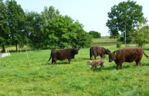 Flachshof Nettetal - Urlaub auf dem Bauernhof am Niederrhein