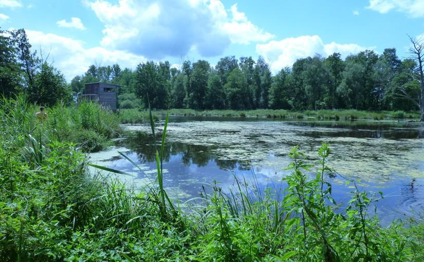 WasserBlicke im Naturpark Schwalm-Nette