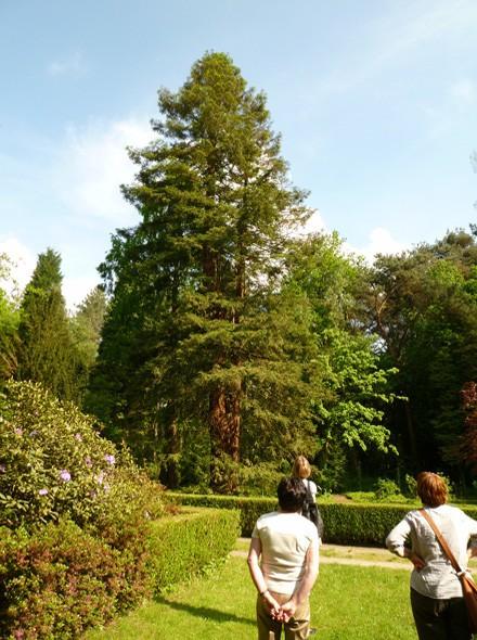 Sequoiafarm im Grenzwald von Kaldenkirchen am Niederrhein