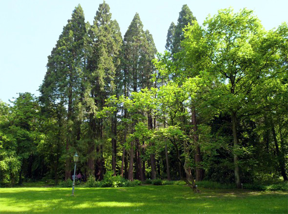 Mammutbaumpark Sequoia-Farm Grenzwald Kaldenkirchen
