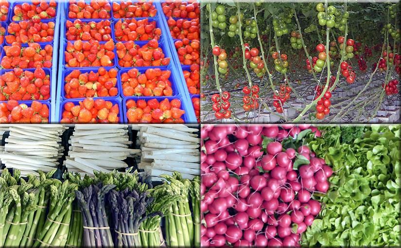 Gartenbauproduktion in Nettetal am Niederrhein