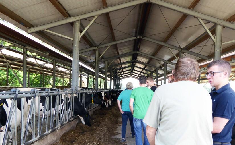 Milcherzeugung im Offenstall Nettetal Niederrhein